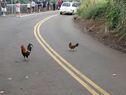 Chicken Running Meme - why did the chicken cross the road wikipedia