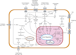 Endocrine System Concept Map Paracrine Signalling Wikipedia