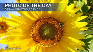 photos of the day august 2017 ctv ottawa news
