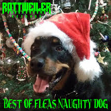 rottweiler records taking submissions for