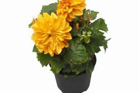 potted flowers types of potted flowers home guides sf gate