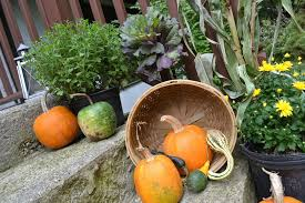 Outdoor Yard Decor Ideas Martha Stewart Fall Outdoor Decorations Ideas U2014 Jen U0026 Joes Design