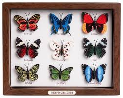 Butterfly Desk Accessories Butterfly Push Pins Eclectic Desk Accessories Paper Source