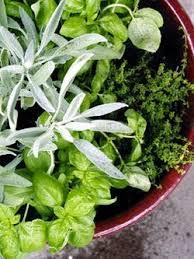 Indoor Herbal Garden How To Make A One Pot Indoor Herb Garden Apartment Therapy