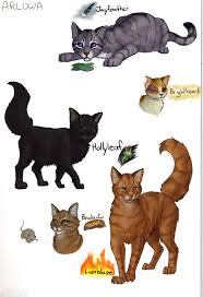 pics photos warrior cats pictures pitchers of warrior cats tridanim