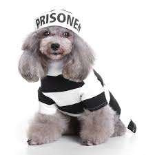 halloween party funny online get cheap prisoner dog aliexpress com alibaba group