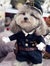 funny dog costumes police officer halloween costume