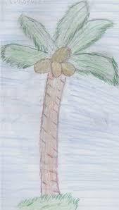 coconut tree drawing by 789lol on deviantart