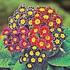 12 Best Annual Flowers For by 81 Best Afternoon Sun Plants Images On Pinterest Sun Plants