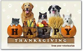 thanksgiving tips for pets veterinarians in leesburg market