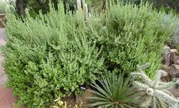 Evergreen Landscaping Ideas Landscaping With Evergreens