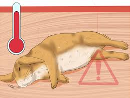 how to walk a rabbit 14 steps with pictures wikihow
