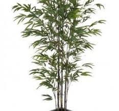 Home Decor Artificial Trees Artificial Trees For Home Decor U2039 Decor Love
