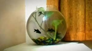 Beta Fish In Vase 2 5 Gallon Fish Bowl Setup And Betta Collection Youtube
