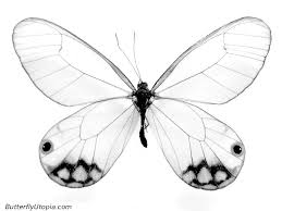 easy beautiful sketches to draw pages butterfly crafts