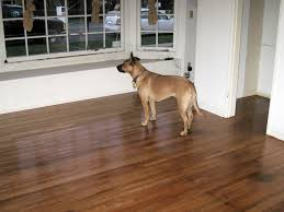 Best Flooring For Pets Pets And Hardwood Floors Living In Harmony