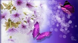 flower fragrant fantasic lilac shine warm fantastic flowers