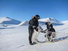 as the planet warms what happens to the reindeer science