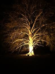 16 best trees with lighting anglesey winter lights images