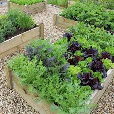 vegetable garden plans wooden raised beds gravel paths patio