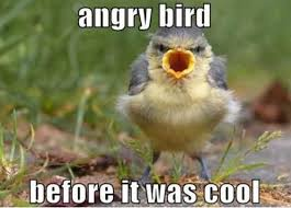 Angry Meme - angry bird before it was cool funny bird meme picture