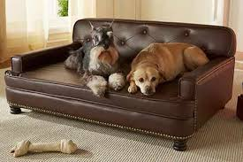 our favorite big dog beds perfect for labs and other large