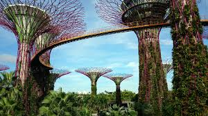 gardens by the bay trees grove skyway singapore