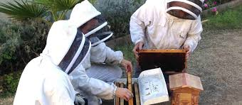 urban beekeeping what u0027s the buzz about kcet