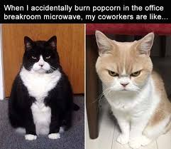 Meme Cheezburger - have some laughs with these 18 animal memes i can has cheezburger