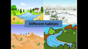 science how animals adapt to aquatic habitat english youtube