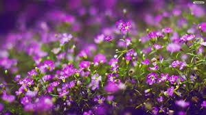 Flower Wallpaper Purple Flower Wallpaper Qygjxz