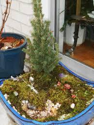winter moss garden forest garden