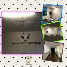 agave pet grooming pet groomers 1852 trawood dr el paso tx