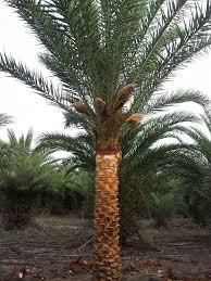 majestic tree farm inc plantant