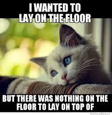 Problem Meme - first world kitty problems weknowmemes