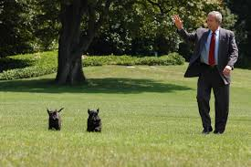 house dogs see which dogs make the best white house guests