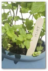 indoor vegetable gardening indoor gardening tips indoor