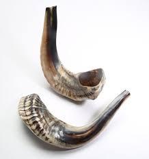 buy shofar horn 44 best shofar images on antlers horn and holy land