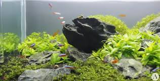 Nature Aquascape Step By Step How To Make Aquascape Nature Style This Is Hobbiesphere