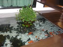 61 best goldfish and koi images on goldfish beautiful