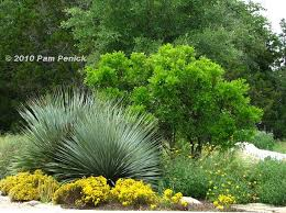 Texas Landscape Plants by 17 Best Ideas About South Texas Landscaping On Pinterest Texas