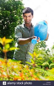 1 indian man garden flower pouring water stock photo royalty free