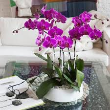orchid arrangements orchid arrangement grandioso white with pink orchids orchid