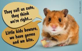 reasons why hamsters aren u0027t the best pets for children or are they