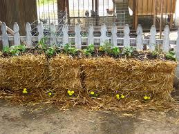 straw bale gardening buen viaje