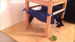 Desk Hammock Diy by How To Diy Cat Hammock Youtube