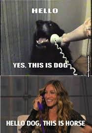 Sarah Jessica Parker Horse Meme - yes this is sarah jessica parker more than reality