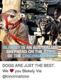 australian shepherd meme 25 best memes about the of the of memes