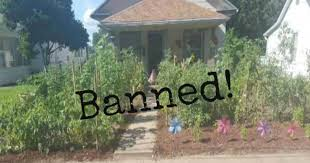 In Front Yard - man charged with a crime and fined for growing a vegetable garden