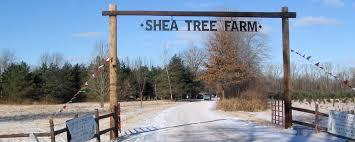 shea tree farm